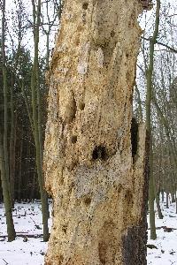Lebensraum - toter Baum