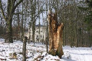 Toter Baum und dahinter die Hegemeisterei im Wildpark in Potsdam
