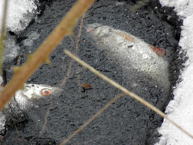 fische im teich ohne pumpe eisvogelsichtung am