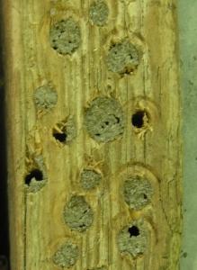 Befestigungslatte für einen Nistkasten mit Bohrungen für Insekten, Insektenasyl