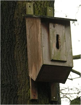 Hornissenkasten in Holzbetonbauweise im Öjendorfer Park in Hamburg