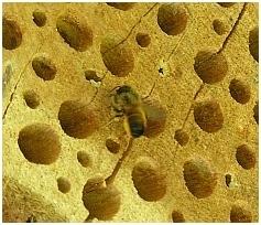 Baumscheibe für ein Insektenhotel