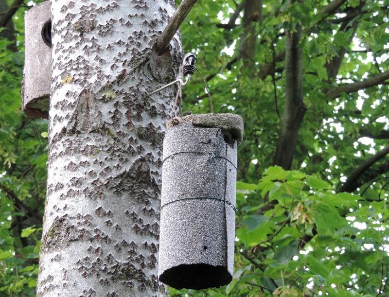 vogeljunges in fremdes nest